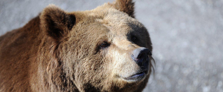 California Map Bear%0A follow up resume email